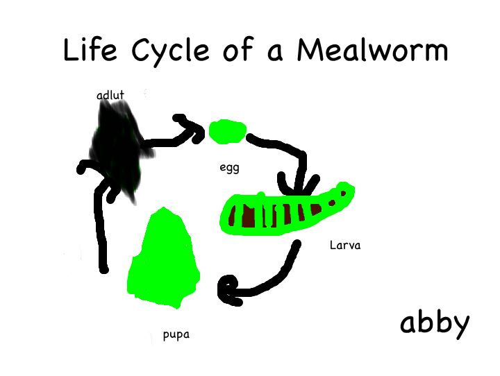 Simple Mealworm Project